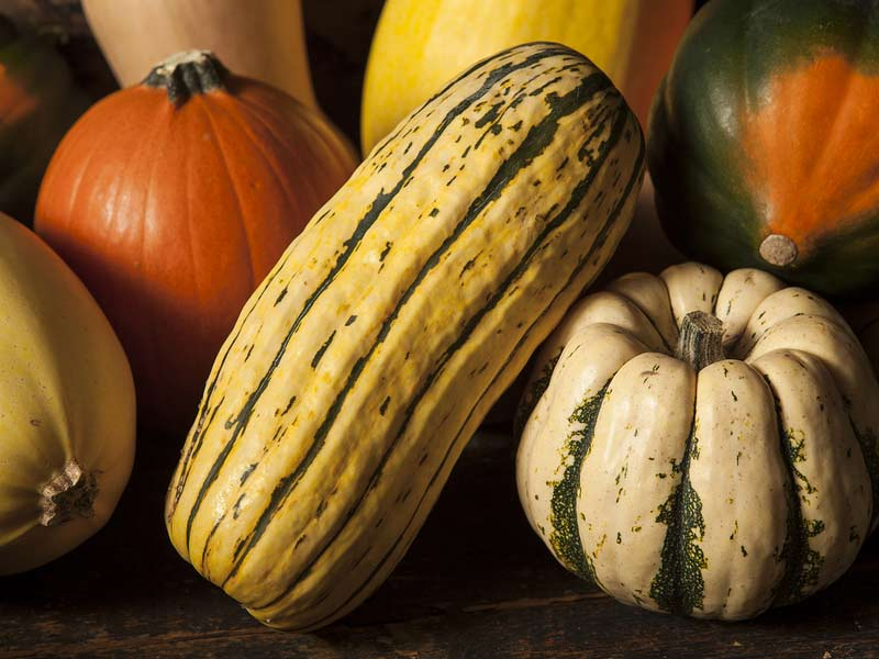nav-vegetables-squash.jpg