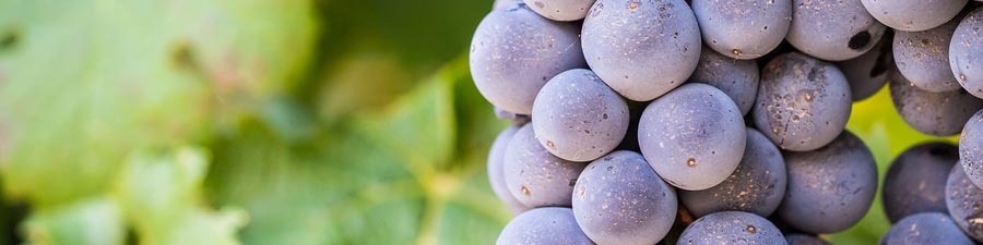wine-grapes-red.jpg